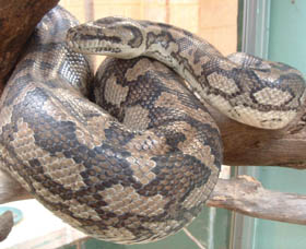 Armadale Reptile Centre - Accommodation Nelson Bay