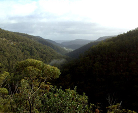 Nattai Gorge Lookout - Accommodation Nelson Bay