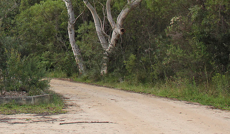 Riverview walking track - Accommodation Nelson Bay