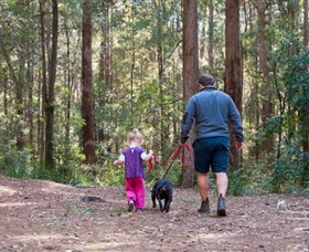 Olney State Forest - Watagan Mountains - Accommodation Nelson Bay