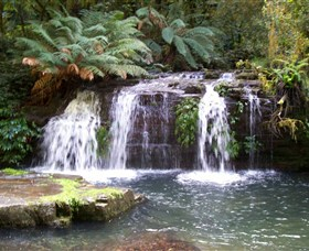 Barrington Tops National Park Walks - Accommodation Nelson Bay