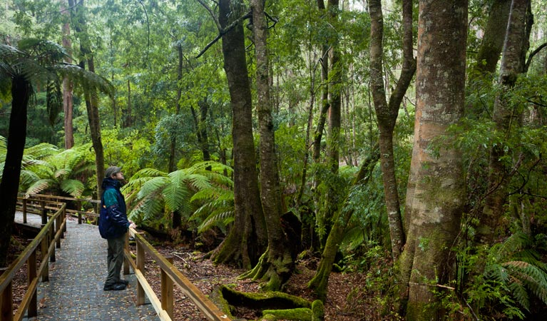 Monga National Park - Accommodation Nelson Bay