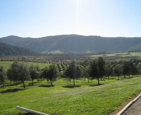 Hastings Valley Olives - Accommodation Nelson Bay