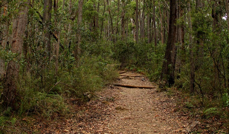 Pigeon House Mountain Didthul walking track - Accommodation Nelson Bay
