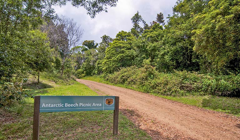 Antarctic Beech picnic area - Accommodation Nelson Bay