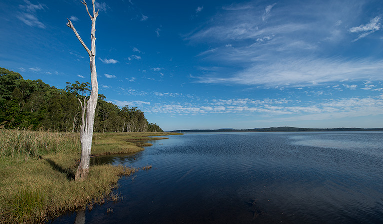 Lake Innes Nature Reserve - Accommodation Nelson Bay
