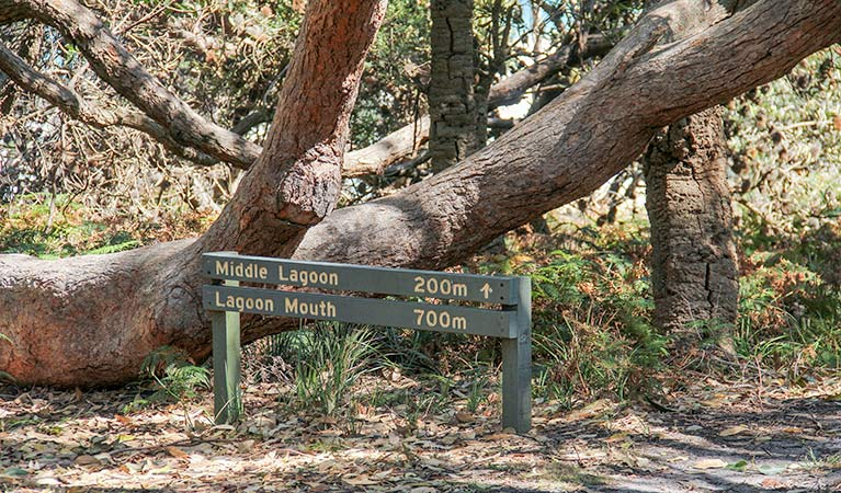 Middle Lagoon walking track - Accommodation Nelson Bay