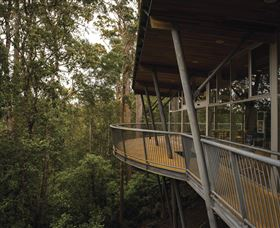 Tarkine Forest Adventures - Dismal Swamp - Accommodation Nelson Bay