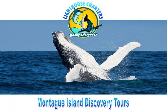 Lighthouse Charters Narooma - Accommodation Nelson Bay