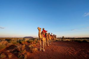 Uluru Camel Express Sunrise or Sunset Tours - Accommodation Nelson Bay