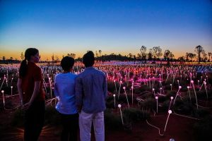 Uluru Field of Light Sunrise Tour - Accommodation Nelson Bay