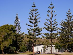 Kurrawa Park - Accommodation Nelson Bay
