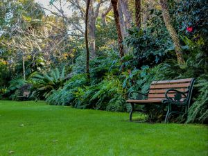 EG Waterhouse National Camellia Gardens - Accommodation Nelson Bay