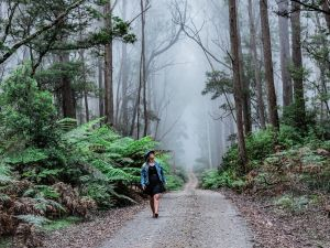 The Corn Trail Walking Track - Accommodation Nelson Bay