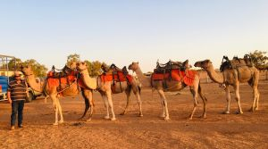 Broken Hill Camels - Accommodation Nelson Bay