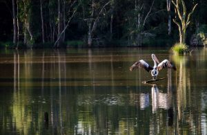 Seaham Swamp Nature Reserve - Accommodation Nelson Bay