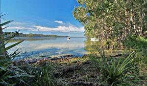 Black Oaks Picnic Area - Accommodation Nelson Bay