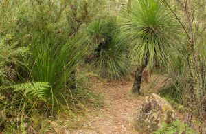 Grass Tree Circuit - Accommodation Nelson Bay