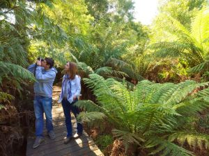 Endeavour Fern Gully Walks - Accommodation Nelson Bay