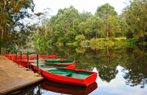 Lane Cove National Park - Accommodation Nelson Bay