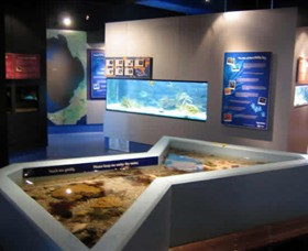 Marine and Freshwater Discovery Centre - Accommodation Nelson Bay