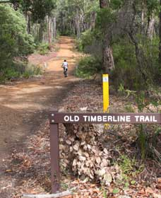 Old Timberline and Sidings Rail Trails - Accommodation Nelson Bay