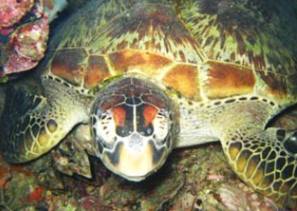 Adrenalin Snorkel and Dive - Accommodation Nelson Bay