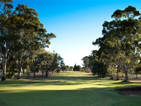 Loxton Golf Club - Accommodation Nelson Bay