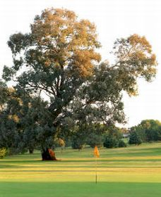 Cowra Golf Club - Accommodation Nelson Bay